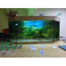 Язи в аквариуме Plavnik.by