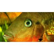 Способна ли рыба различать цвета